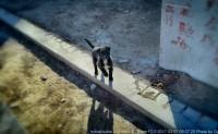 《我是一只来自北方孤独的狗》 北京街头随拍呐