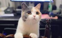 《顾先生与猫》先生:餘生很長,何必慌張?