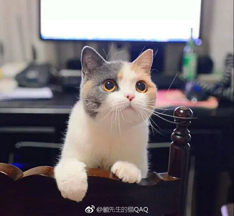 顾先生的猫