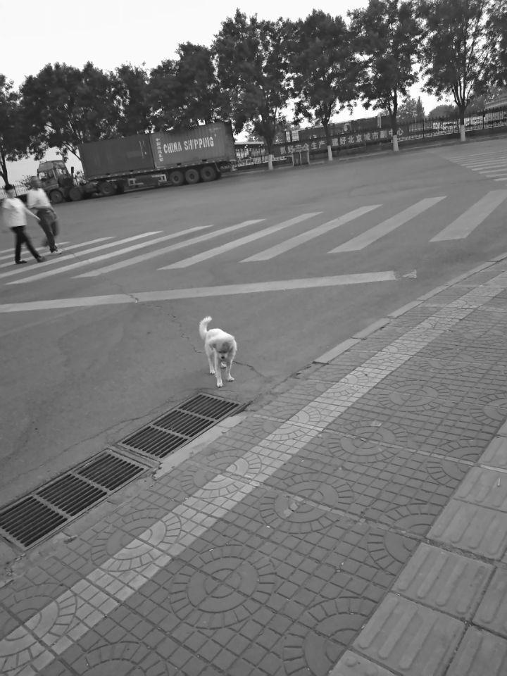 Guyahn拍摄小狗于20170516